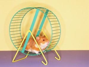 hamster wheel exercise cardio