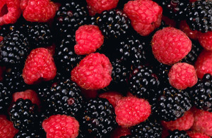 raspberry ketones shmasberry ketones