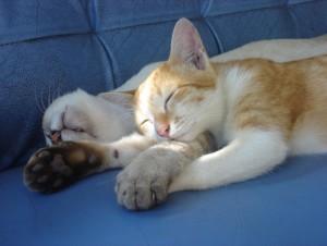 cats sleeping 1341079_58916389